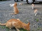 cat006s.jpg